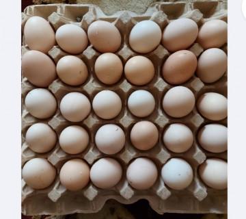 Yumurta satılır