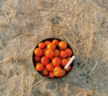 Sahe pomidoru