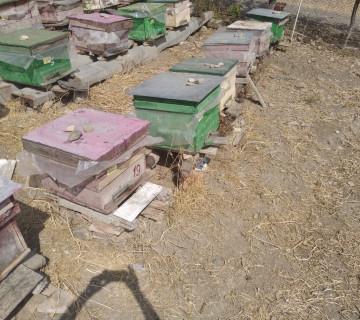Arı Ailəsi Satılır - İsmayıllı