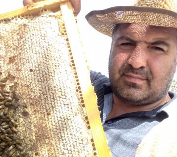 təmiz bal, çöl arısı balı