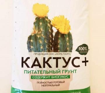 Kaktus torpagi
