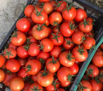 Zirə pomidoru