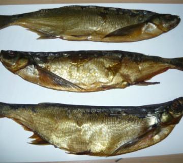 Çexon balığı
