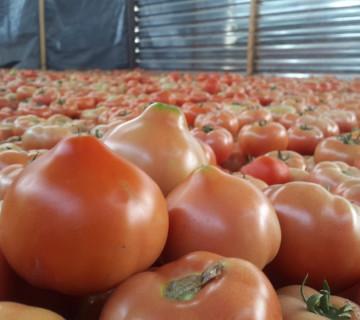 Maxitos Pomidor