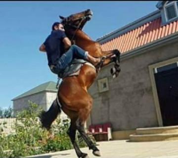 At Satılır