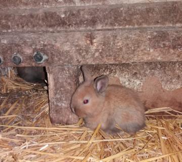 Böyüməyən dovşanlar