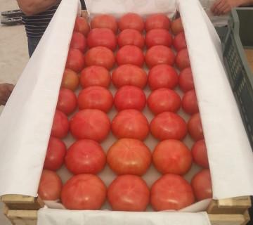 Pomidor alıram
