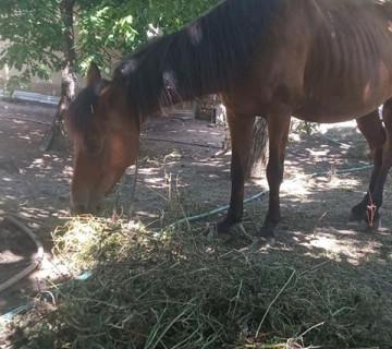 Madyan at satılır