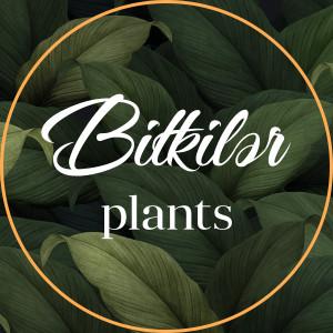 Bitkilər - Plants