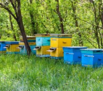 15 yeşik arı ailəsi