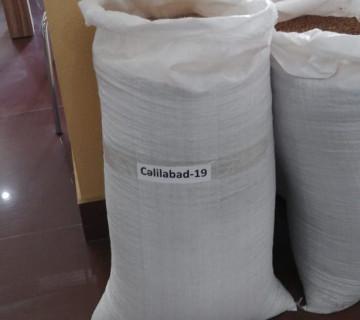 Cəlilabad -19