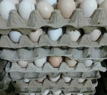 Kənd yumurtası