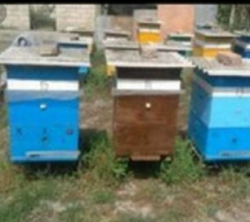 Arı ailəsi
