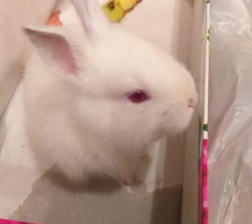 Böyüməyən dovşan