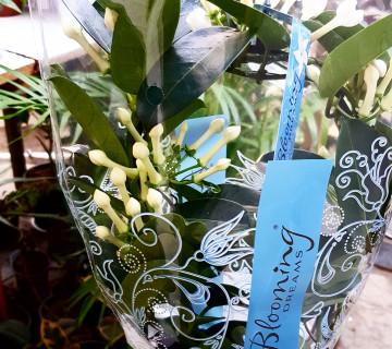Otaq bitkileri