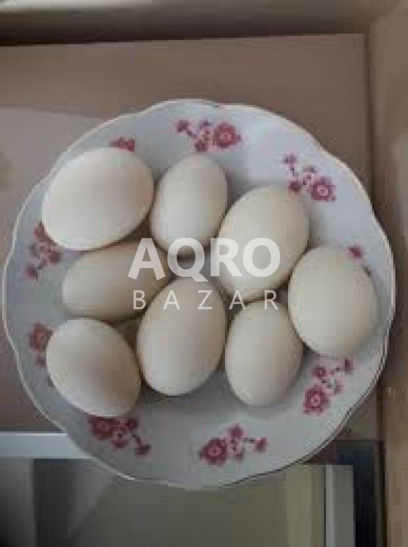Ördək Yumurtası