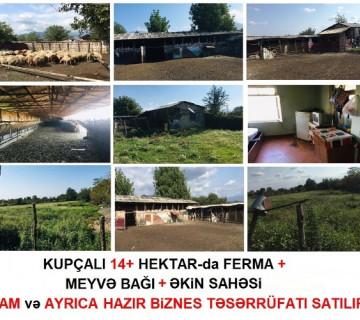 Ferma 14 hektar