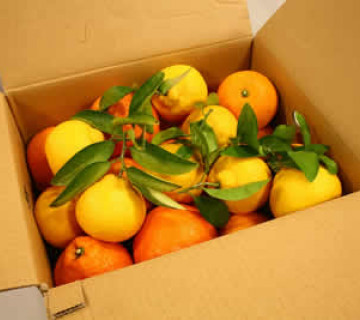 Apelsin Mandalin Qutuları