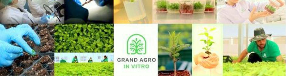 Grand-Agro InVitro